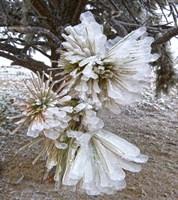 Pine Needles and Ice Fine Art Print