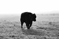 Bull After Ice Storm Fine Art Print