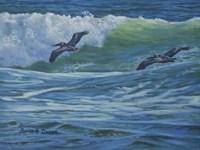 Pelican Skimmers Framed Print
