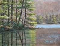Pine Lake Fine Art Print