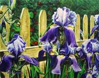 Iris By The Fence Fine Art Print