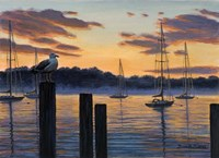 Sea Gull And Sails Fine Art Print