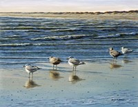 Cape May Herring Gulls Fine Art Print