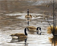 North Carolina Geese Fine Art Print