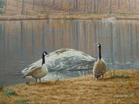South Carolina Geese Fine Art Print