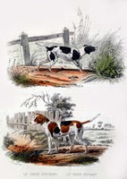 Pair of Dogs I Fine Art Print