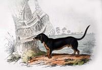 Dog V Fine Art Print