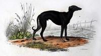 Dog VI Fine Art Print