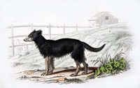 Dog VII Fine Art Print