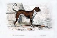 Dog VIII Fine Art Print