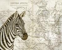 Burchell's Zebra Framed Print