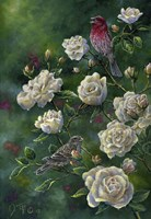 Purple Finch Fine Art Print