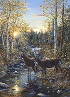 Whitetail Deer Fine Art Print