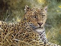 Leopard Portrait Fine Art Print