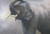 Asian Elephant Dusting Fine Art Print