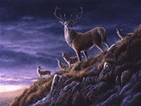 Threatening Sky Red Deer Fine Art Print