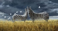Coming Of Rain Zebra Fine Art Print
