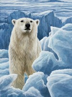 Ice Bear Polar Bear Fine Art Print