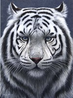 White Tiger Ghost Fine Art Print