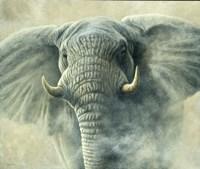 Storm Elephant Fine Art Print