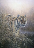 Tiger At Dawn Fine Art Print