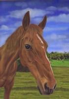 Field Horse Fine Art Print