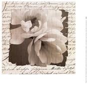 Woven Magnolia  I Fine Art Print
