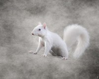 Albino Squirrel Fine Art Print