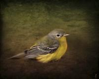 Baby Warbler Fine Art Print