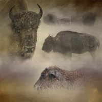 Buffalo Dreams Fine Art Print