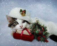Christmas Kitten In The Snow Fine Art Print