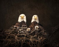 Family Is Forever Bald Eagles Fine Art Print