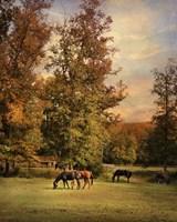 Grazing In Autumn Fine Art Print