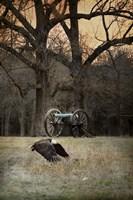 Low Flyer Bald Eagle Fine Art Print