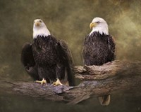 Mates Bald Eagle Pair Fine Art Print