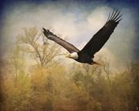 Monarch Of The Skies Bald Eagle Fine Art Print
