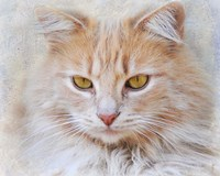 Orange Tabby Cat Portrait Fine Art Print