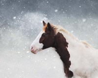 Paint Horse In The Snow Fine Art Print