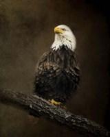 Portrait Of An Eagle Fine Art Print