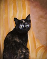 Royal Kitten Fine Art Print