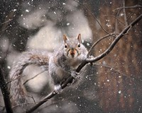 Snow Day Squirrel Fine Art Print
