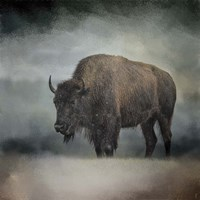 Stormy Day Buffalo Fine Art Print