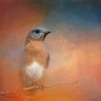 Summer Day Bluebird Fine Art Print