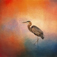 Sunset Heron Fine Art Print
