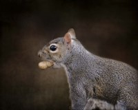 The Nut Collector Squirrel Fine Art Print