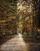 Autumn Forest 3 Fine Art Print