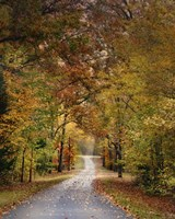 Autumn Passage 4 Framed Print