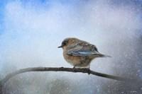 Bluebird In The Snow Framed Print