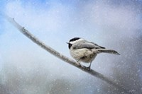 Chickadee In The Snow Framed Print