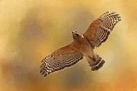 Raptors Afternoon Flight Fine Art Print